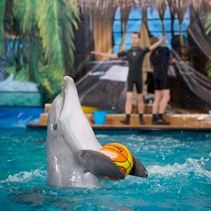 Дельфинарии, океанариумы Чишмов