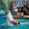 Дельфинарии, океанариумы в Чишмах